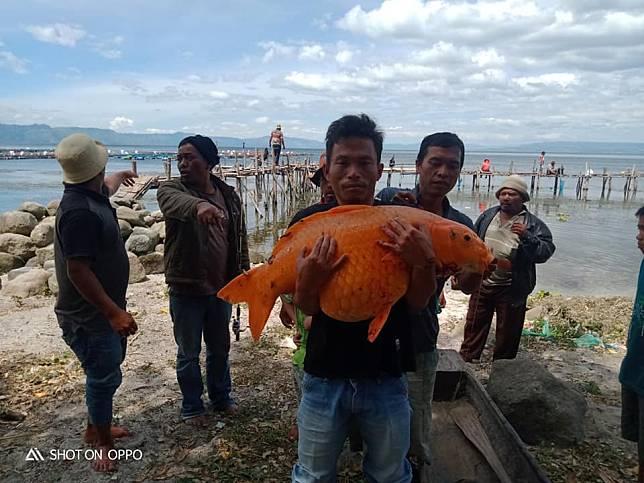 Gambar Nelayan Dan Ikan Mas Detik Detik Warga Tangkap Ikan Mas Seberat 15 Kg Hebohkan Dunia Maya